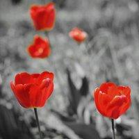 Красное на черном :: Павел Евстратов