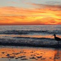 Закат на Мексиканском заливе :: Ekaterina Nikolaeva