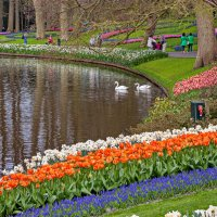 Tulips in Holland 04-2015 (22) :: Arturs Ancans