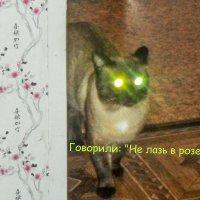 Кот катафот :: Сергей Щербаков