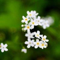 Весенние напевы... #10 :: Андрей Вестмит