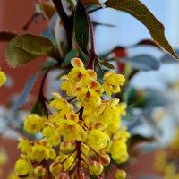 Цветы :: Кристина Семакина