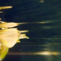 скорость под водой :: Александр