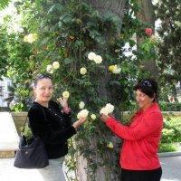 Розы в губернаторском саду :: maxim