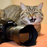 За Nikon порву! :: Андрей Кузьменко