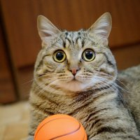 Мечта моя, баскетбол! :: Андрей Кузьменко