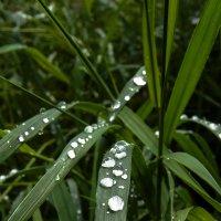 Следы дождя :: Виталий Павлов
