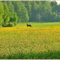 Весна,весна... :: Геннадий Ячменев