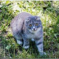 Кошка Лиля :: Елена Миронова
