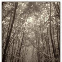 таинственный лес :: Sergey Bagach