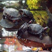 Turtles :: Vilma Zutautiene