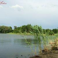 Река Цна :: °•●Елена●•° ♀