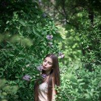 цветет в садах сирень :: Алла Панасенко