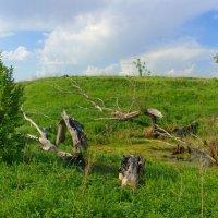 На болоте :: Роман Царев