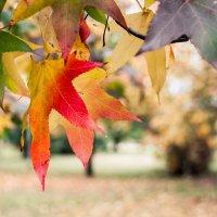 Осень :: Alex In