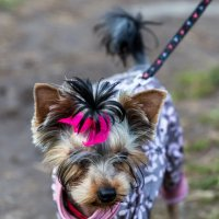 Fashion dog! :: Sergey Sergaj