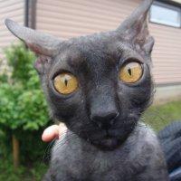 Котёнок :: Леонид Бугон