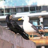 Из жизни птиц. Мы такие разные, но все равно вместе... :: TATYANA PODYMA