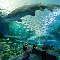 В одном из многочисленных туннелей морского мира (Торонто) :: Юрий Поляков
