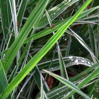 Среди травы-муравы ) :: Natali