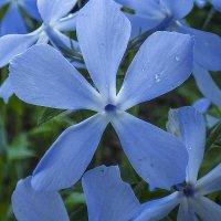 Цветы :: Валерий Изотов
