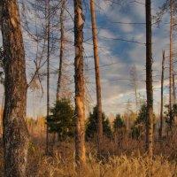 в осеннем лесу :: sergej-smv