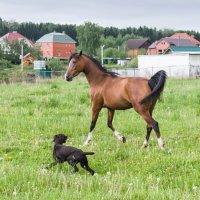 Собака играет с лошадью :: Николай Ефремов