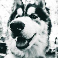 Собака :: Иван Ежов