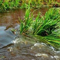 Ручьистые речистые... :: Лесо-Вед (Баранов)