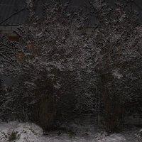 зима :: олег мысак