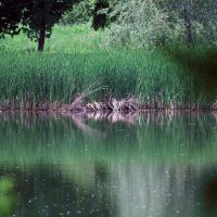 На озере :: Владимир Немцев