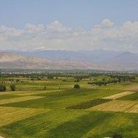 Араратская долина, май, жарко :: M Marikfoto