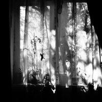 Утренние кулисы :: Катерина Чебышева