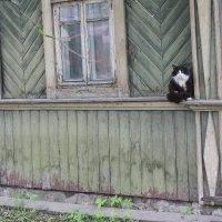 Нашел спокойное место... :: Татьяна Латышева