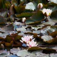 flower :: Vitaliy Turovskyy