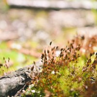 Весна в лесу) :: Natascha Krupina