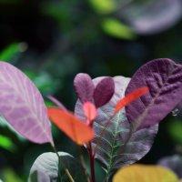 Разноцветные листья :: Владимир Немцев