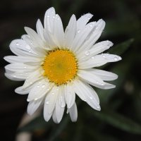 Цветочный хоровод-109. :: Руслан Грицунь