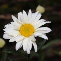 Цветочный хоровод-107. :: Руслан Грицунь