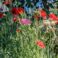 В саду :: Николай Николенко