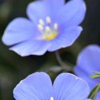 Цветы лета :: Вадим Поботаев