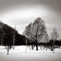На морозном ветру :: Андрий Майковский