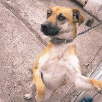 Пёс цепной :: Алексей Таскаев