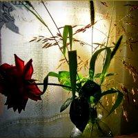 Золотые брызги заката .....и......роза............ :: Людмила Богданова (Скачко)