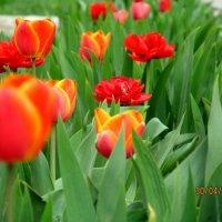 Весна в Орле :: Наталья Малышева