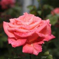 Цветочный хоровод-115. :: Руслан Грицунь