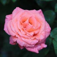 Цветочный хоровод-112. :: Руслан Грицунь