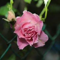 Цветочный хоровод-111. :: Руслан Грицунь
