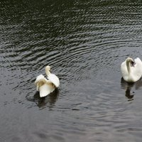 Танцы на воде... :: Алёна Савина