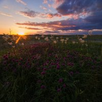 Розовый закат :: Лилия Будаева